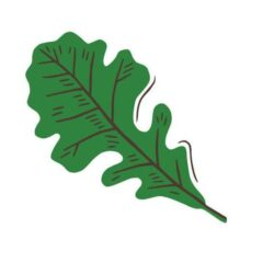 Good Oak Ecological Services Joins MESBA!